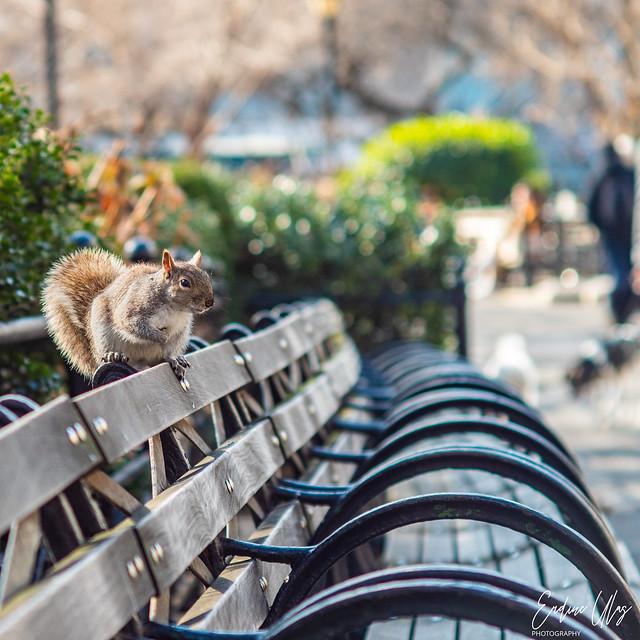 Squirrel in Union Square Park