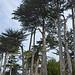 Picnic Under Cypress