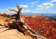 Hoodoos and Rock Formations - Bryce Canyon National Park, Southwestern Utah