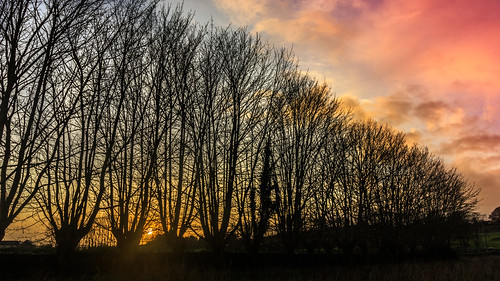 2020 kilkenny landscape leinster outdoor sun sunset thomastown winter clouds field green ireland sky trees silhouette photography
