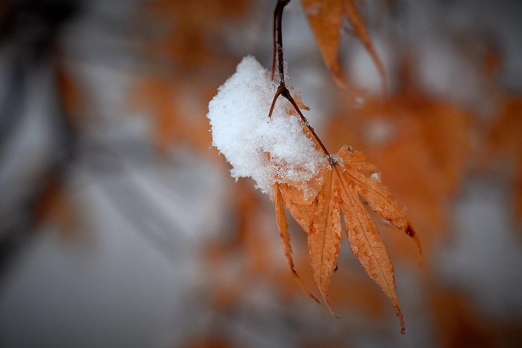 Leaf with Snow