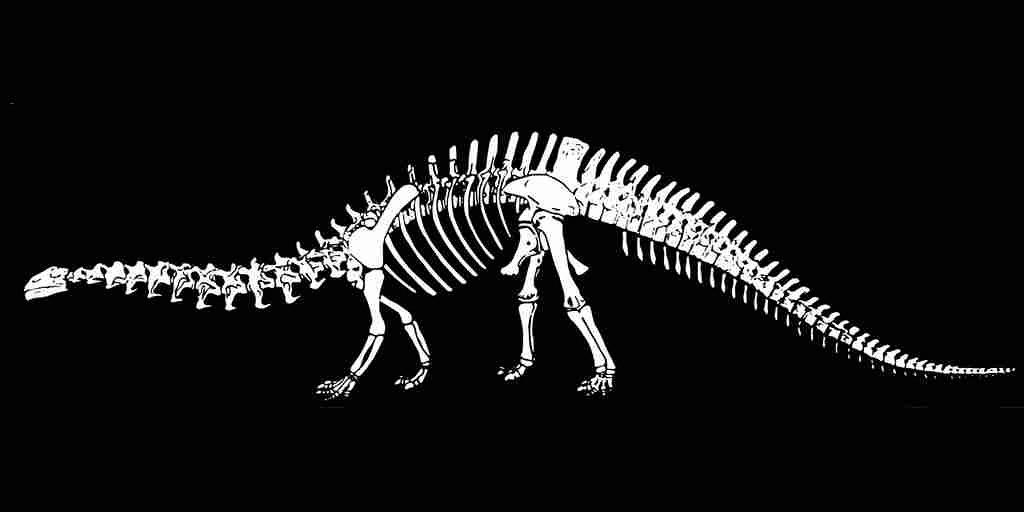 une-maladie-qui-affecte-les-humains-a-été-découverte-dans-un-os-fossilisé-de-dinosaure