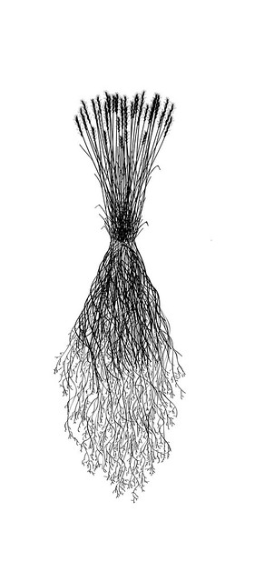 Our Native Roots - Individual Plant Artwork