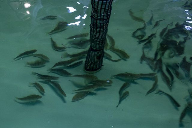 The Farmory Perch Fish Hatchery Opens