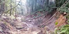 Landslide and debris flow on SR 706 outside Mt. Rainier National Park
