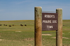 Roberts Praire Dog Town