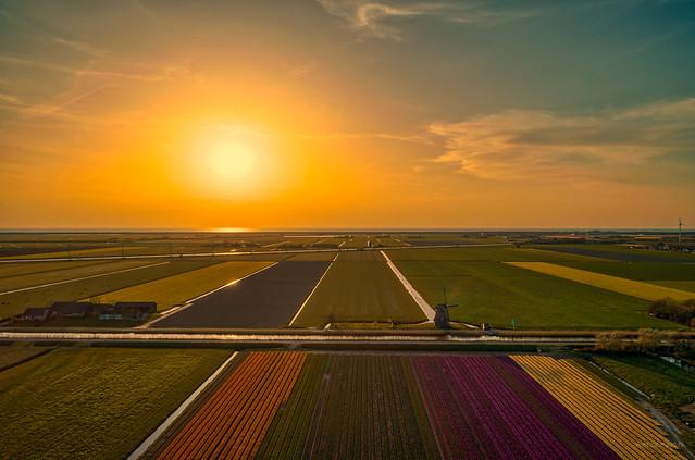 Dutch polder landscape.