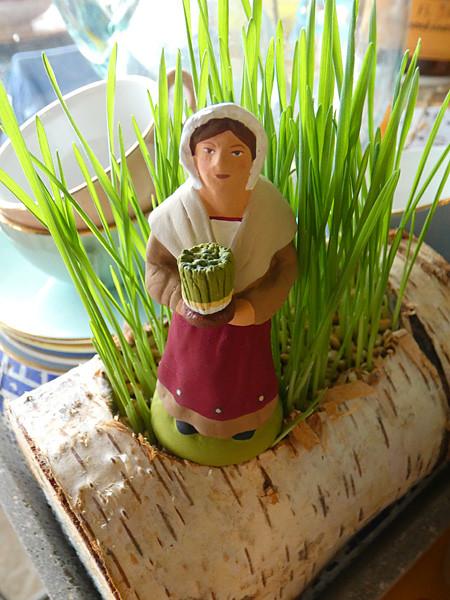 le blé de la Sainte-Barbe