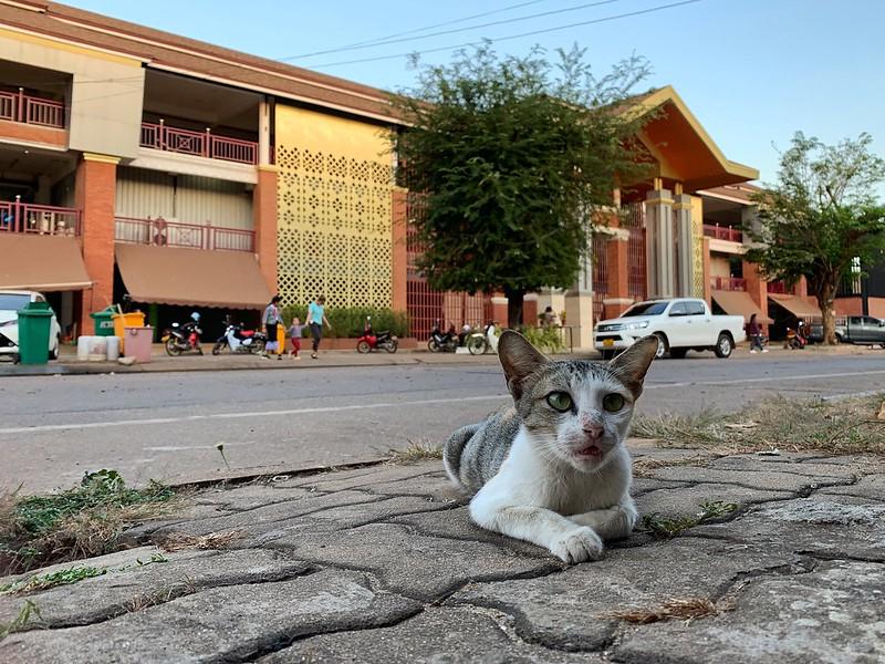 Pakse - Laos - Kitten