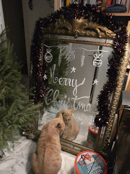 merry christmas little cat