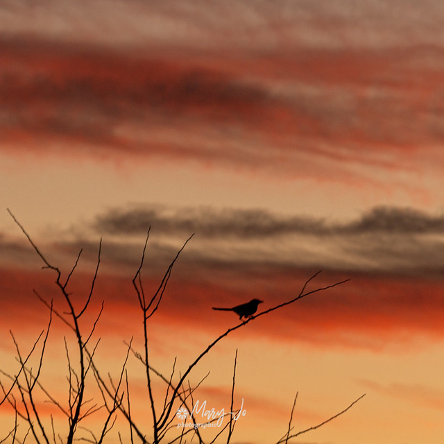 Le petit oiseau dans le ciel ... the little bird in the sky ...