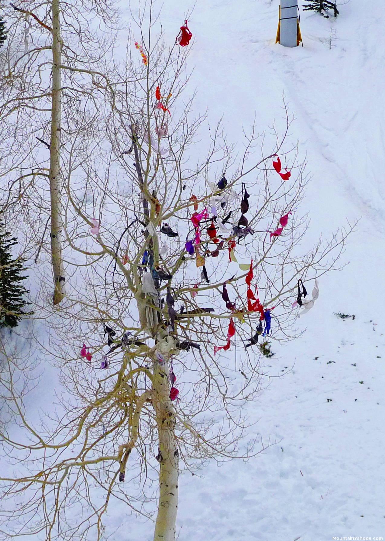 Bra Tree en Snowbird