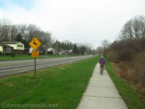 Deer crossing along the Irondequoit Lakeside Trail, Rochester, New York