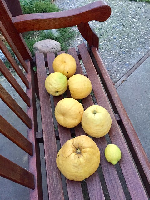 Lemons from the same tree