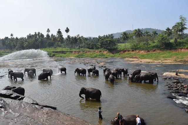 Sri Lanka, Pinnawala, Elephant Orphanage
