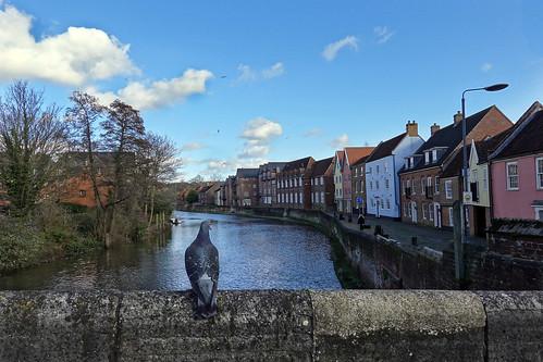 norwich friars quay pigeon river wensum bridge