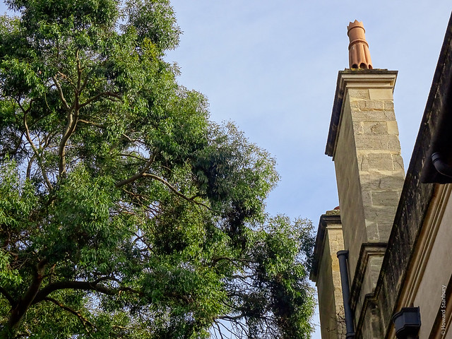 Tree and chimney