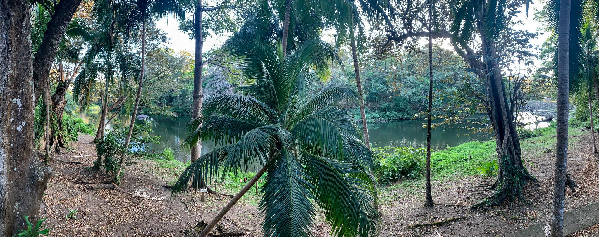 Cañas Castilla - [Costa Rica]