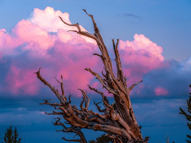 White Mountains Ancient Bristlecone Pine Forest California Fuji GFX100 Fine Art Landscape Nature Photography! Elliot McGucken dx4/dt=ic Fuji GFX 100 Fujinon GF Lens Master Fine Art Medium Format Photographer! FUJIFILM GF 100-200mm f/5.6 R LM OIS WR Lens!