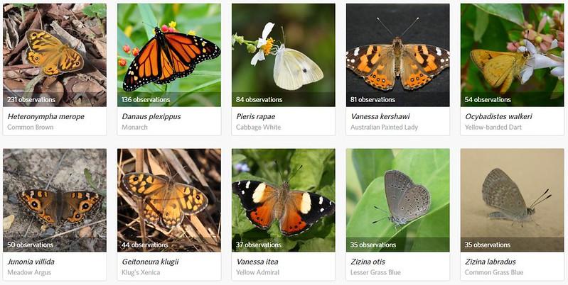 200213 - Top 10 Butterfly species