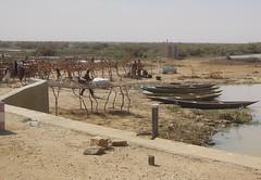in den Sümpfen des Senegal-Unterlaufs