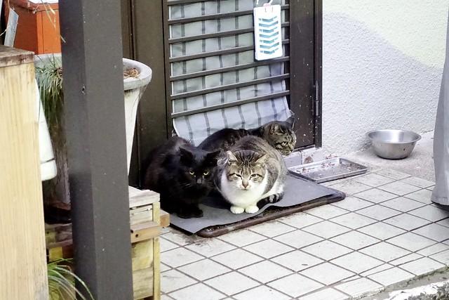 Today's Cat@2020-02-13