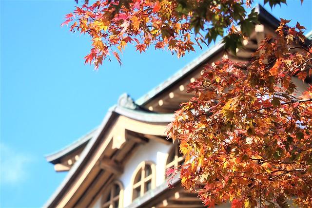 takashimajo-sakura011
