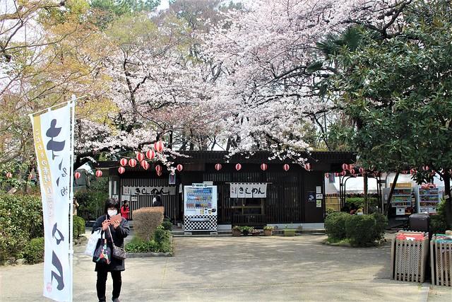 nagoyajo-sakura069