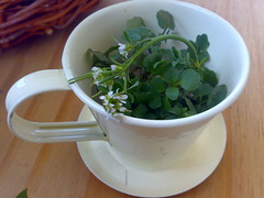 A cup of...herbs