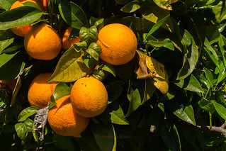 Oranges | by americo.rosa