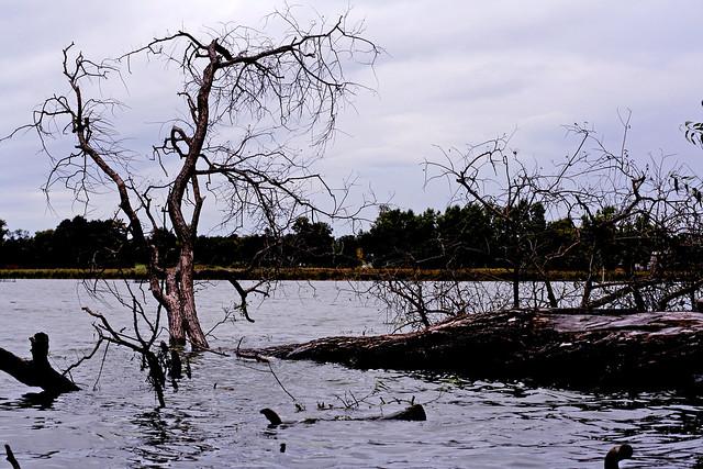 Due to insurmountable circumstances ....😔. Pond on the river Pustoha near village Chervone. Zhytomyr region. Ukraine.