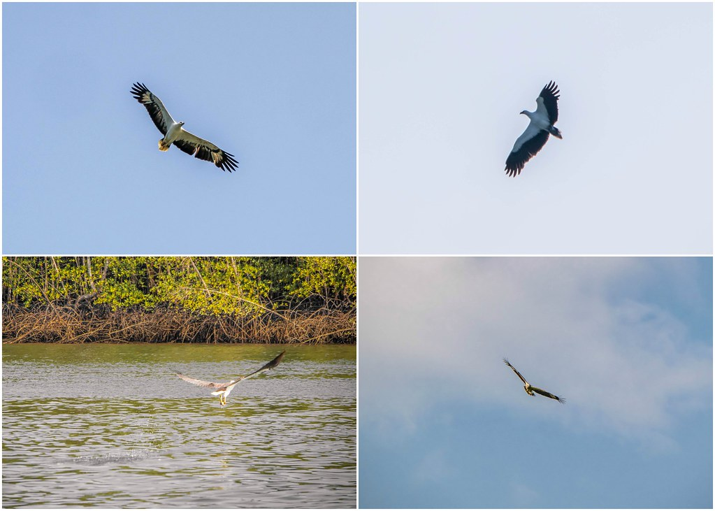 tanjung-rhu-langkawi-eagles-alexisjetsets