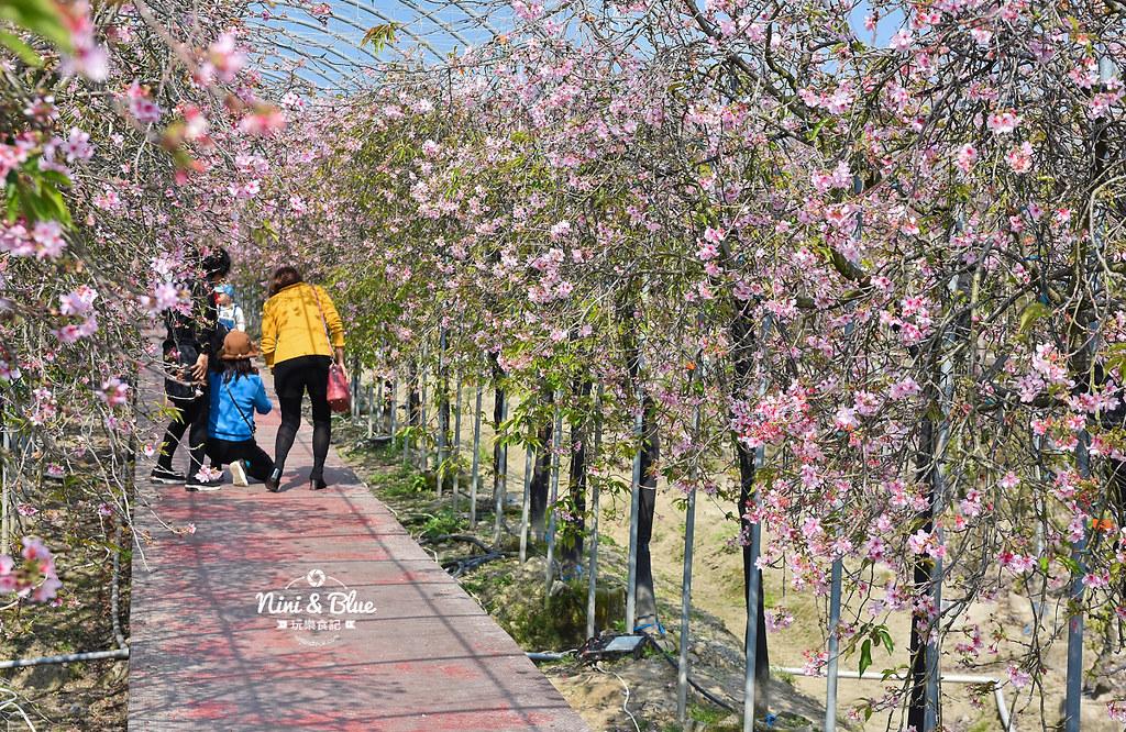 台中櫻花種苗場 彰化芬園花卉園區04