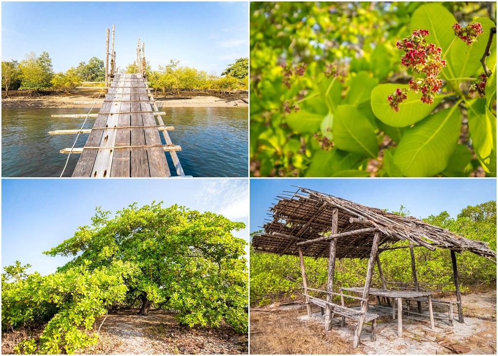 tanjung-rhu-langkawi-mangrove-tour-alexisjetsets