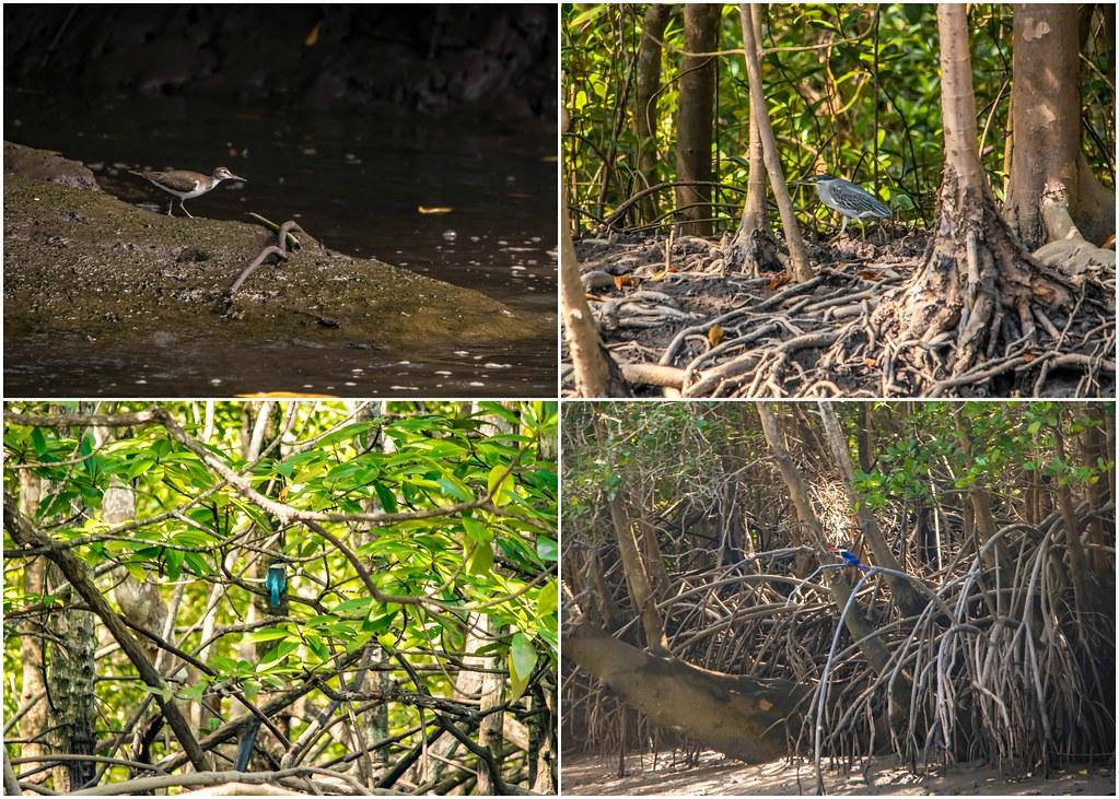 tanjung-rhu-langkawi-birds-alexisjetsets