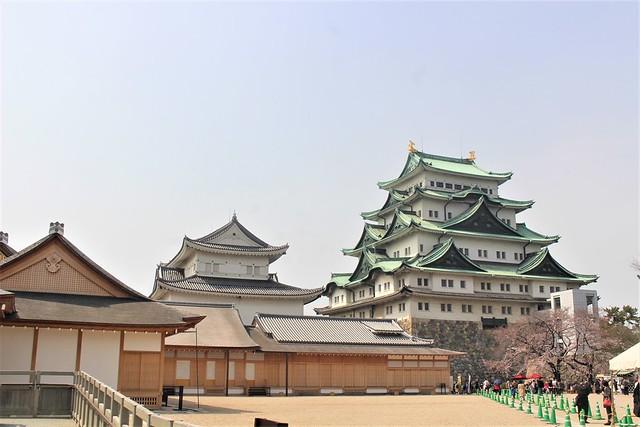nagoyajo-sakura016