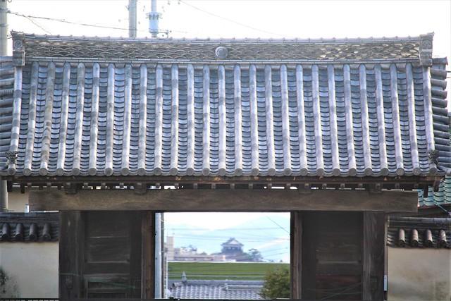 okazakijo-sakura055