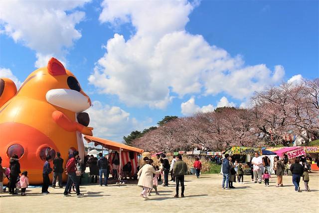 okazakijo-sakura052