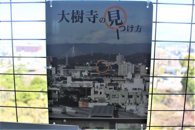 okazakijo-sakura039