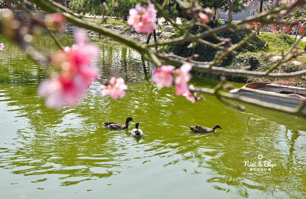 台中櫻花種苗場 彰化芬園花卉園區12