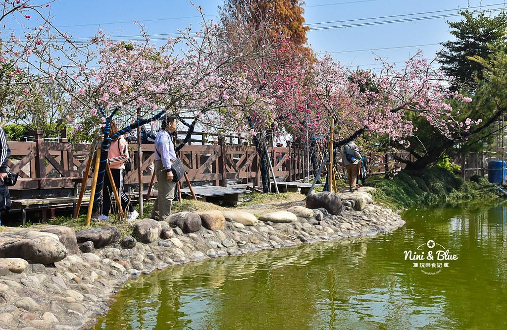 台中櫻花種苗場 彰化芬園花卉園區11