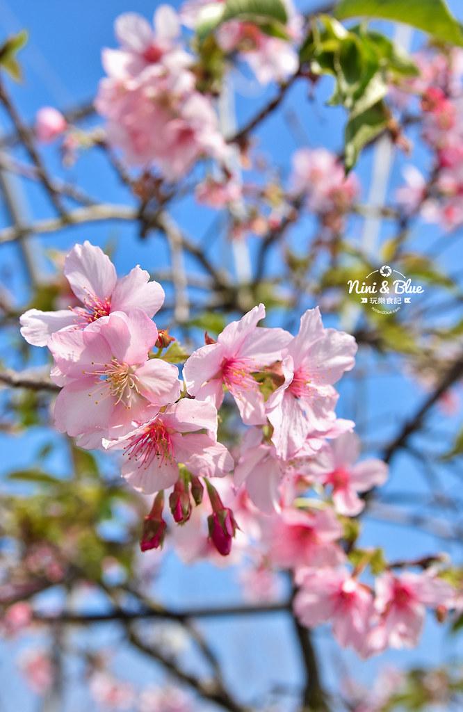 台中櫻花種苗場 彰化芬園花卉園區06