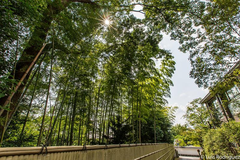 Bosque de bambú del dojo especial del templo Nanzen-ji