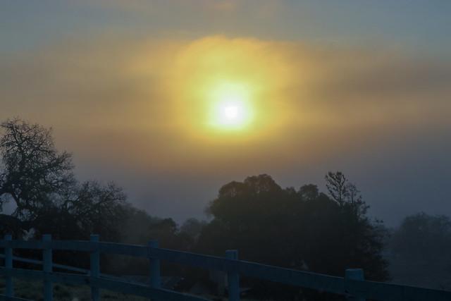 #sunrise this morning @travelpaso @visitcalifornia   #nature #landscape #fog #clouds #teamcanon #smugmug #pasorobles #winecountry #travel #california #visitpasorobles #slocounty #soslocal #sanluisobispo #oaktree #visitcalifornia
