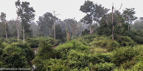forestswoodsbush landscape karnataka india asia