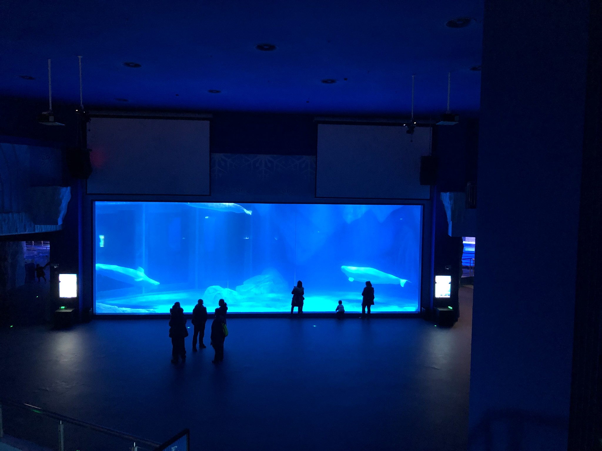 2019 CCA Investigation into Shanghai Haichang Polar Ocean World