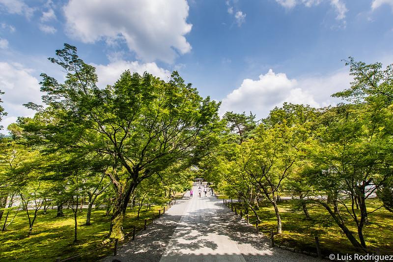 Preciosa vegetación del templo Nanzen-ji