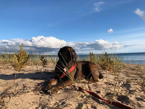 Pancake Bay Hector on the beach