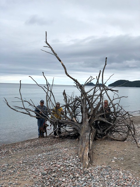 Lake Superior - Driftwood