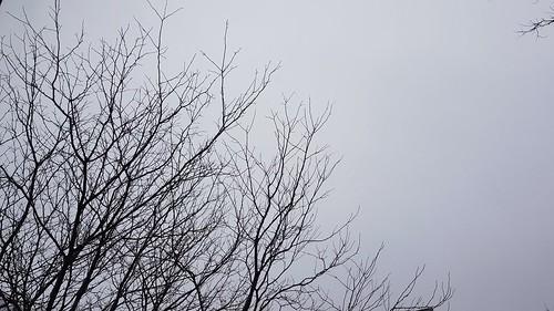 February gray